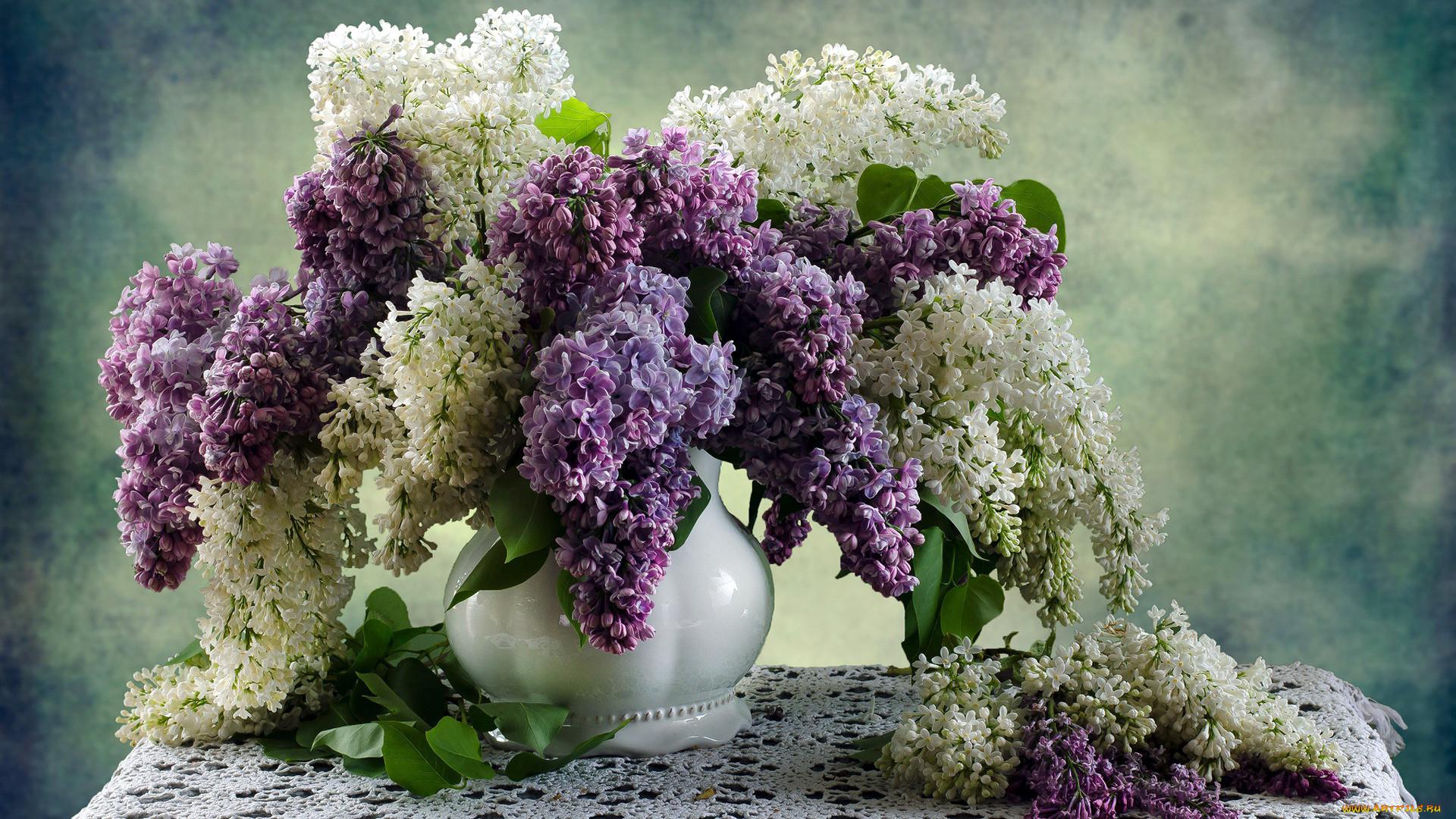 сирень в вазе картинки красивые всегда смотрела